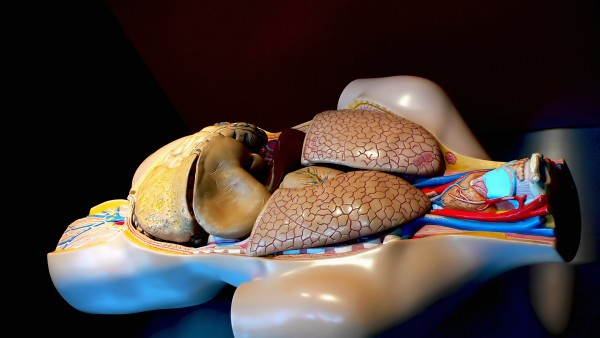AnatomyMorguefile