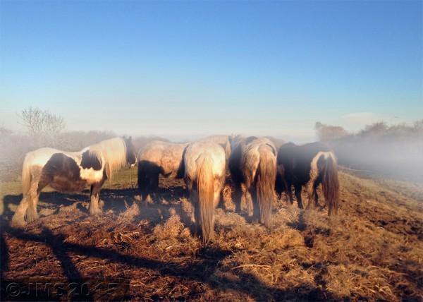 HorsesMistWEB