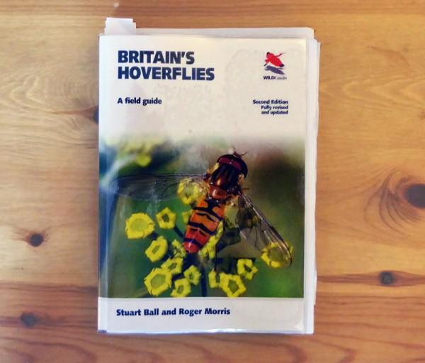 HoverflyBlog-EndMay-3